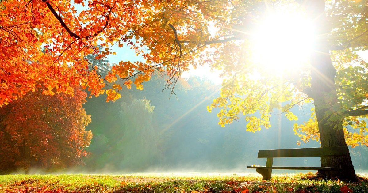 transmutation news october 2012 1200x630